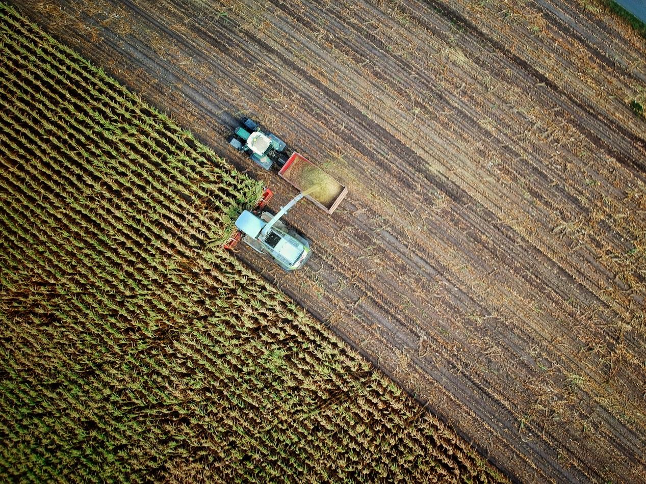 agricultura  instalação de uma cultura agrícola