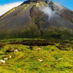 PRORURAL+ tem taxa de execução nos Açores acima da média europeia