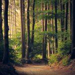 OFERTA DE EMPREGO: Técnico de Certificação – Área Florestal Porto (m/f)