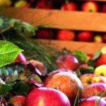Agricultura tem mais um mercado aberto. Maçãs e pêras já podem seguir para o Panamá