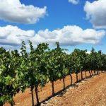 PDR 2020: candidaturas abertas a investimento de jovens agricultores no sector vinícola