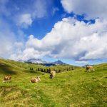 As previsões da UE para a agricultura 2030: mais produção de azeite, menos consumo de carne
