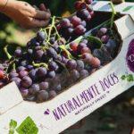 Portugal vai poder exportar uva de mesa para a China