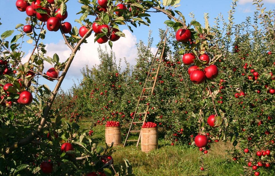 diminuir custos na empresa agrícola a importância do agronegócio