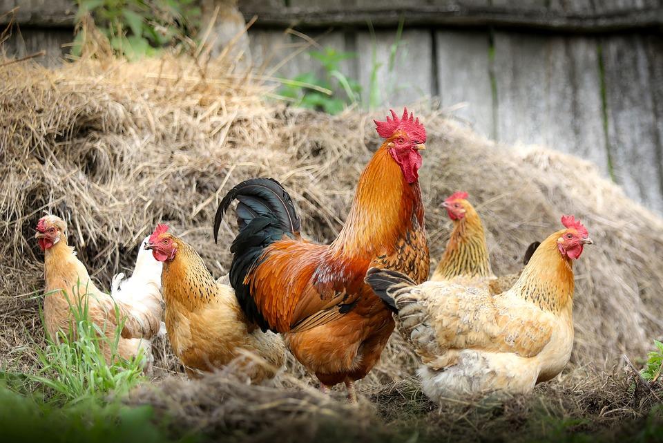 gestão do agronegócio dicas para poupar dinheiro