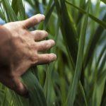 10 Factos que deve saber sobre um agricultor