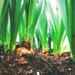 OPORTUNIDADE :Bolsa de Investigação para Licenciado em Ciências Agrárias