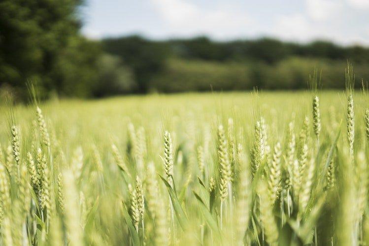 licenciamento área agrícola