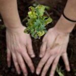 Famalicão cede gratuitamente projectos de florestação e oferece plantas