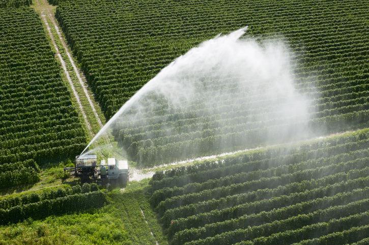 cultura agricola mais rentavel agricultura