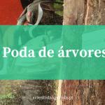Aprenda a fazer a poda de árvores de forma correta: dicas úteis