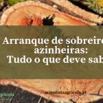 Evite multas – Notas sobre o arranque de sobreiros e azinheiras em Portugal