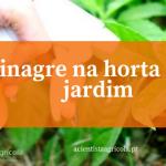 7 razões para usar vinagre na sua horta e/ou jardim