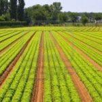 Portugal supera Alemanha e Bélgica na agricultura biológica