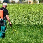 Agricultor sem cartão de aplicador? DGAV actualiza lista de fitofarmacêuticos autorizados