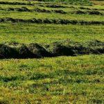 Marcas de exploração agrícola sem animais por período superior a 12 meses são desactivadas