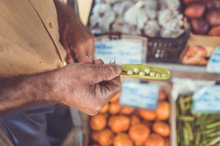 politicas agricolas nos paises desenvolvidos