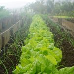 OPORTUNIDADE:Técnico de Horticultura (m/f)