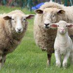 OPORTUNIDADE DE EMPREGO: Técnico-Comercial área Animal (m/f)