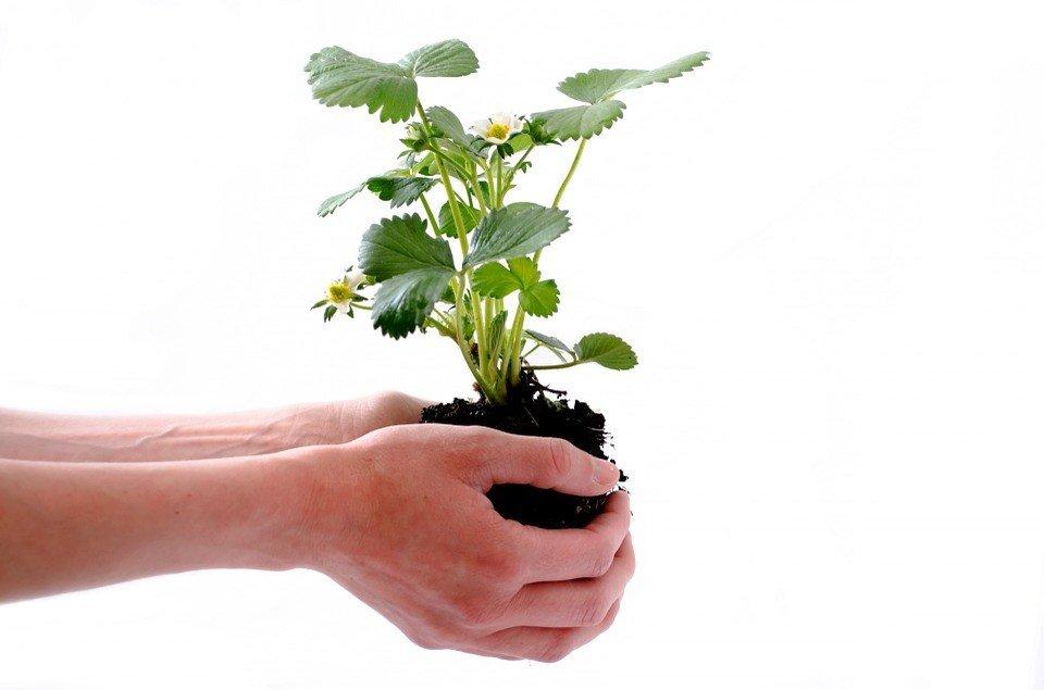 substratos para horta