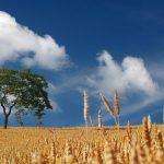 Governo anuncia 190 milhões de euros de apoios financeiros à agricultura