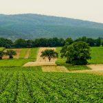 É na agricultura que há maior crescimento de empresas
