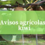 Aprenda a combater as pragas e doenças da cultura do kiwi