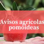 Principais pragas e doenças das macieiras, pereiras e nespereiras: medidas preventivas