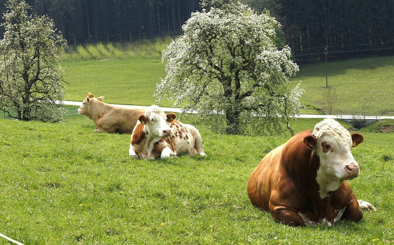 economia circular agricultura