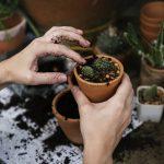 OPORTUNIDADE: Ajudantes de Jardineiro (M/F) – Leiria