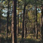 Governo vai investir 9 M€ em material de limpeza das florestas