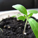 4 substratos para 4 plantas distintas: conheça as minhas dicas