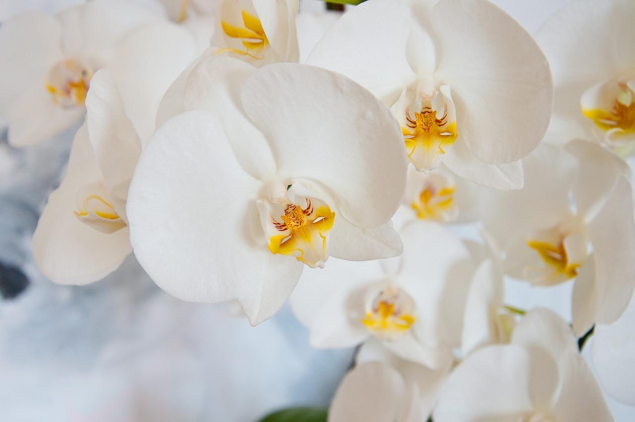 cuidados a ter com orquídeas