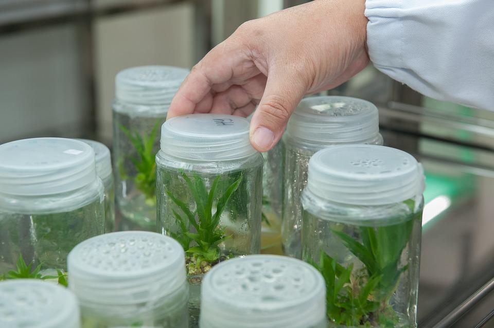 biotecnologia agrícola