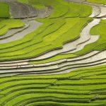 OPORTUNIDADE DE EMPREGO: Técnico Agrícola (m/f)