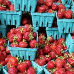 Oferta de emprego: Operadores Agrícolas (M/F) – APANHA MORANGO (m/f)