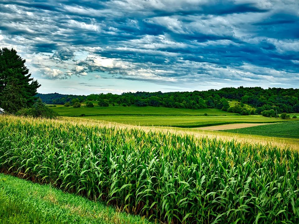 subproprodutos do milho