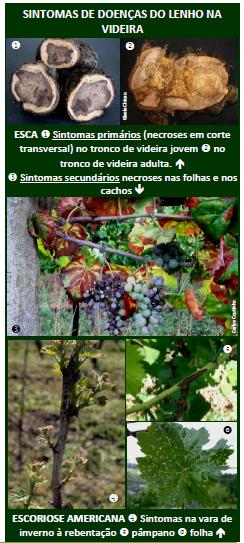 doenças do lenho na vinha