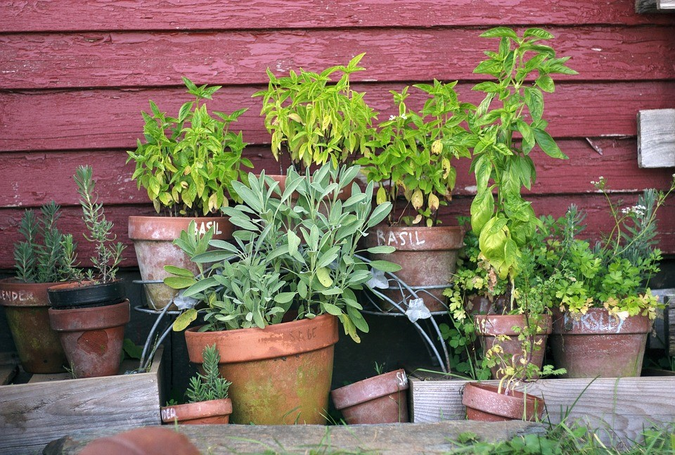 como fazer canteiro de ervas aromáticas
