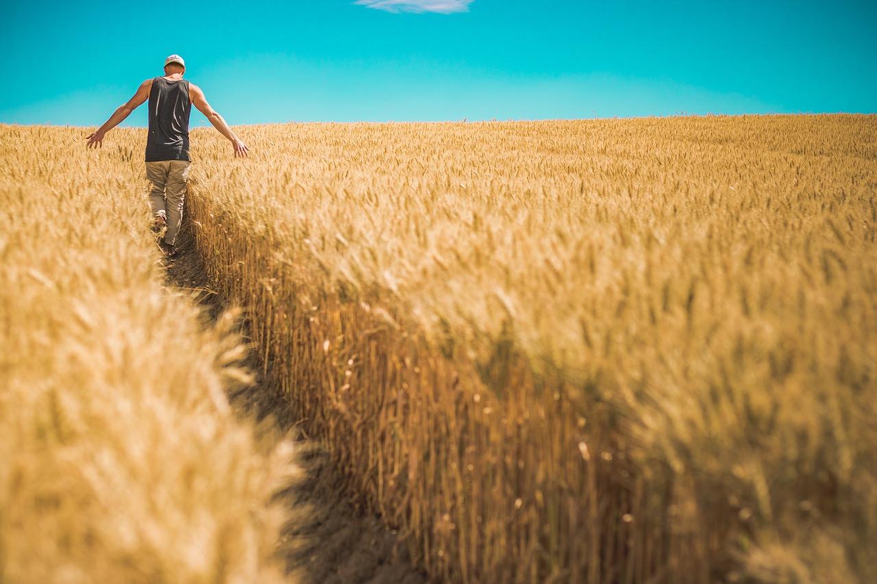 subprodutos do trigo