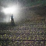 EMPREGO: Engenheiro Agrónomo – Setor de Fertilizantes (m/f)