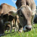 INE: Pastagens e forragens com adiantamento no desenvolvimento vegetativo