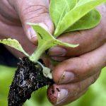 Governo lança nova linha de 190ME para apoiar projetos agrícolas