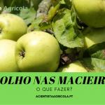 Piolho nas macieiras: saiba como prevenir esta praga