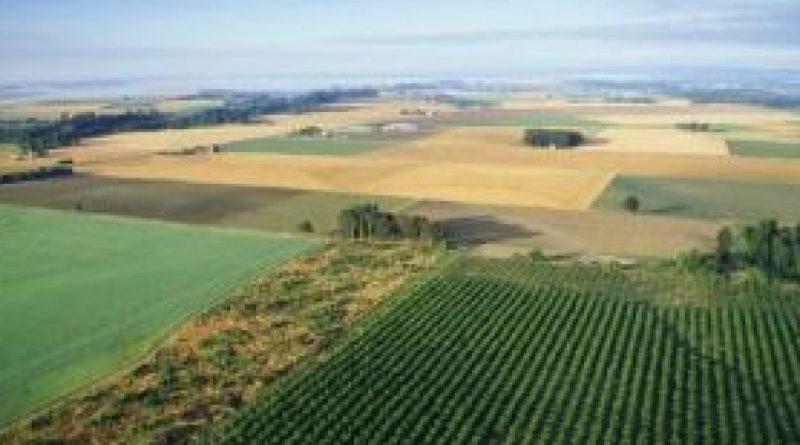 OPORTUNIDADE: Engenheiro Agroflorestal (m/f)