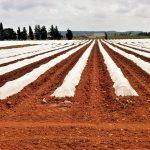 Oferta de emprego: Trabalhador agrícola (m/f)