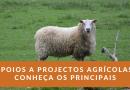 Conheça os principais apoios à agricultura disponíveis para fazer crescer o seu negócio agrícola
