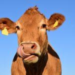 OPORTUNIDADE: Auditor de Exploração Agro-Pecuária (m/f)