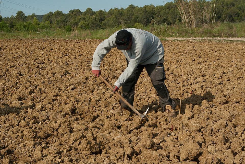 PDR 2020 jovem agricultor