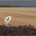 OPORTUNIDADE DE EMPREGO: Técnico Superior Agrícola (m/f)